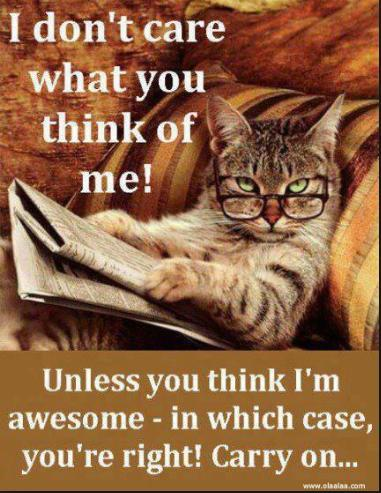 I dont care what you think of me cat funny photo