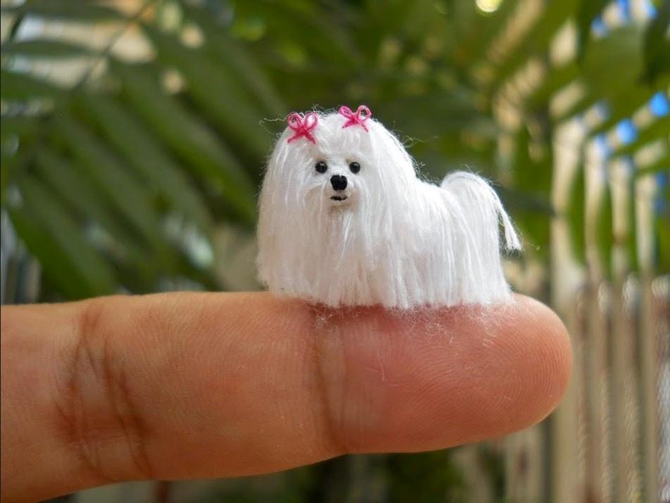 A miniature Yarny