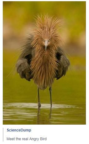 Science Dump real angry bird weird photo
