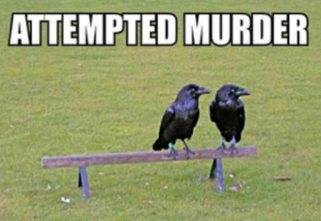 attempted murder funny photo