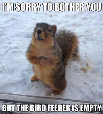 birdfeeder empty funny photo