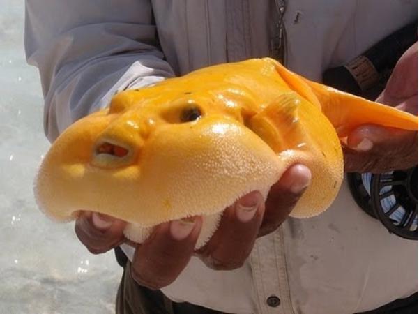 The Blob Fish