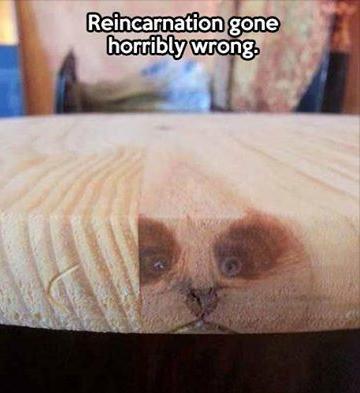 cat in wood reincarnation gone wrong weird photo