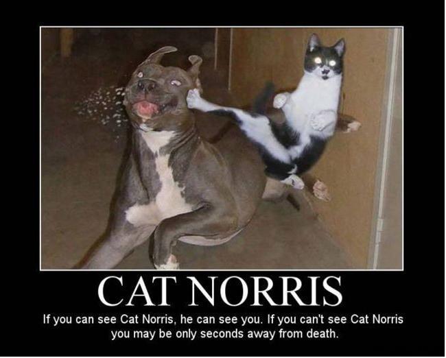 cat norris funny photo