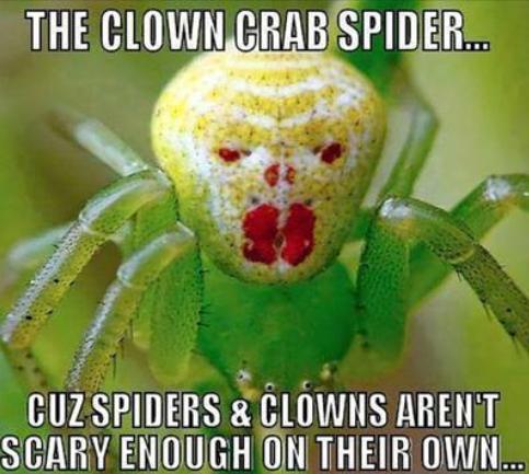 clown spider weird photo