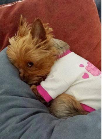 cuddly puppy....