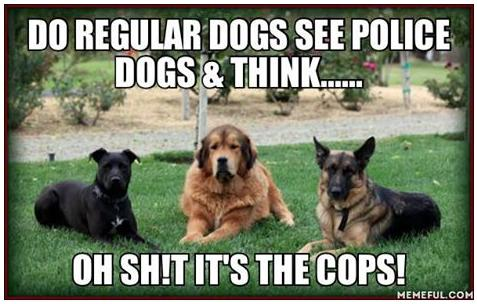 do regular dogs see police dogs and say funny photo