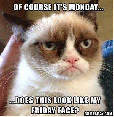 does this look like my friday face funny photo