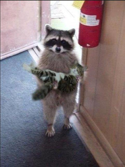 Excuse me... is this your kitty?
