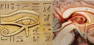 Eye-Of-Horus/Pineal Gland comparison
