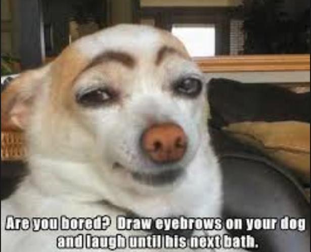eyebrows on your dog funny photo