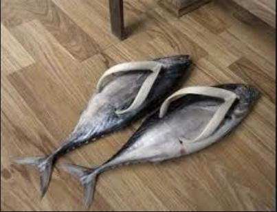 Fish flops!