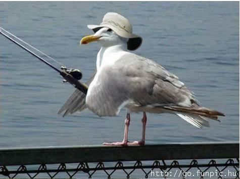 Teach a bird to fish...