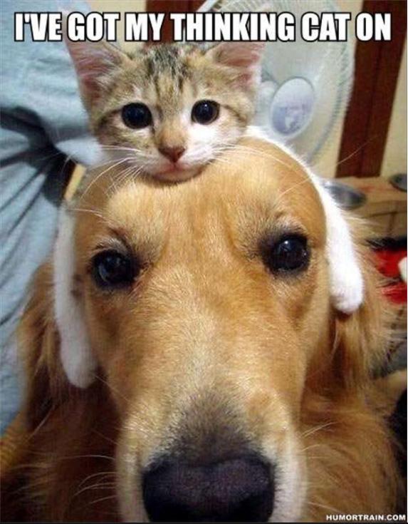 got my thinking cat on funny photo photo