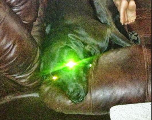 green eyed dog weird photo