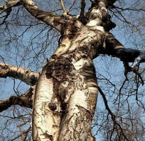 Nature imitating nature?