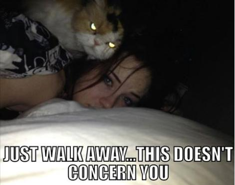 Mob cat caught in the act...
