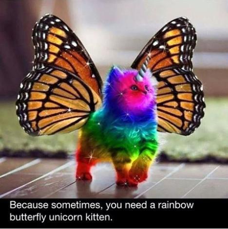 rainbow butterfly kitten funny photo