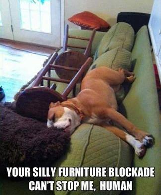 silly furniture blockade funny photo