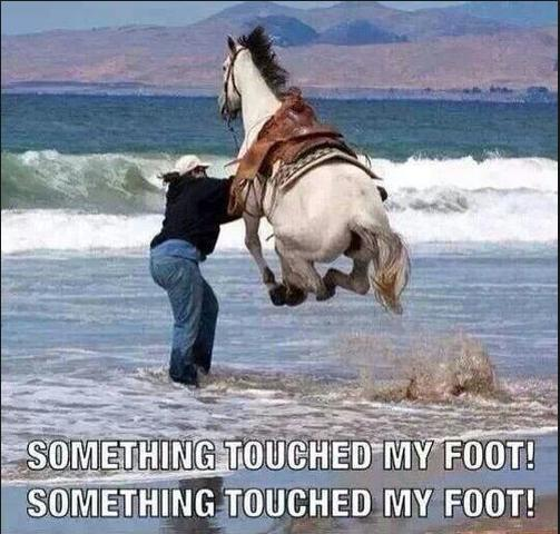 something touched my foot horse funny photo