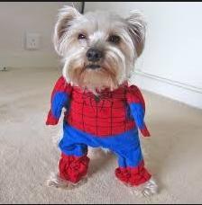 spiderdog photo