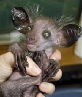 strange little animal weird photo