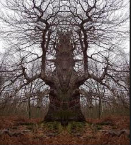 strange scary tree weird photo