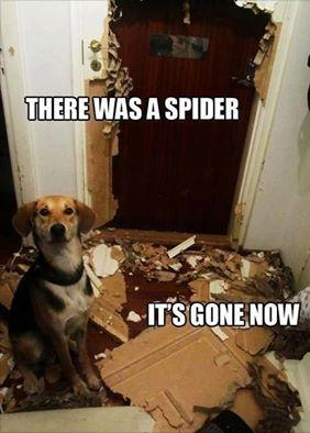 there was a spider funny photo