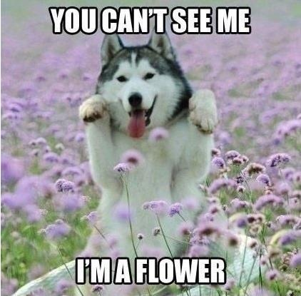 you can't see me im a flower funny photo