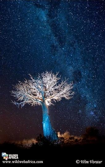 african tree cool photo