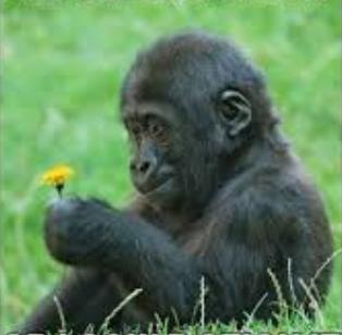 ape with flower cool photo