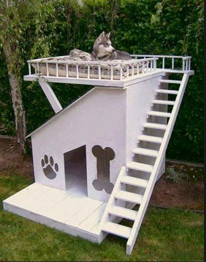 awesome dog house cool photo