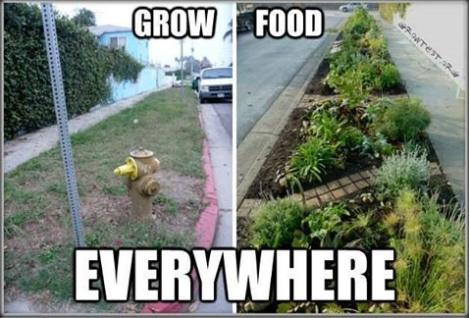 grow food everywhere cool or truth photo