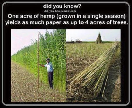 one acre of hemp truth or cool photo