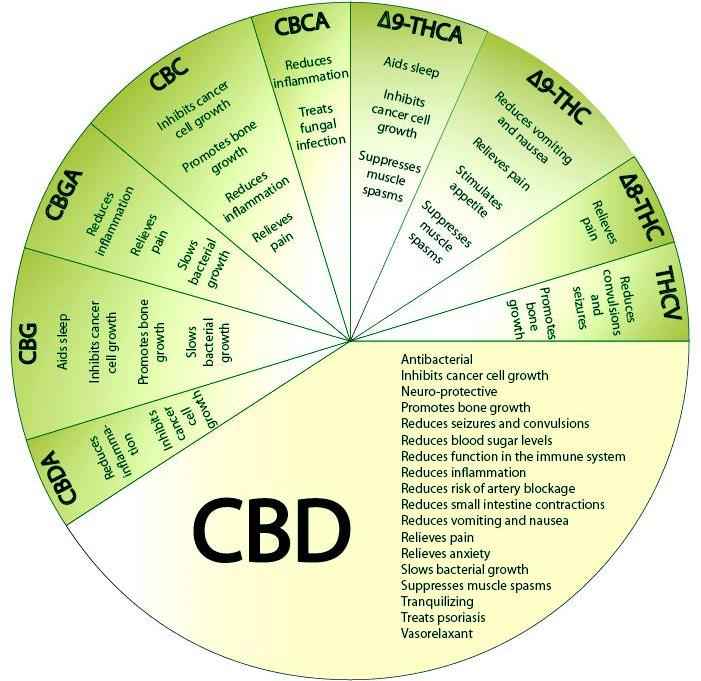 CBD THC wheel truth photo