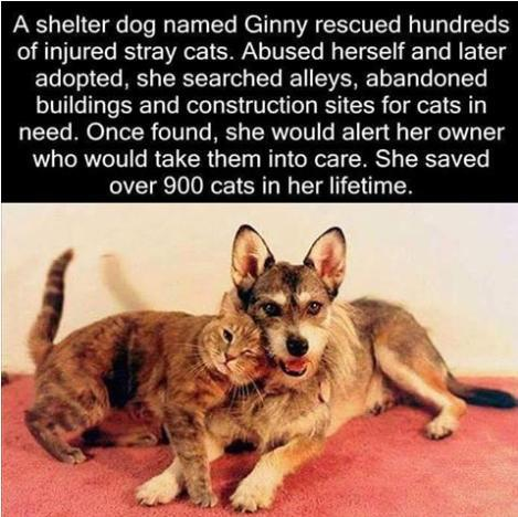 Ginny the cat saving dog cool or hero photo